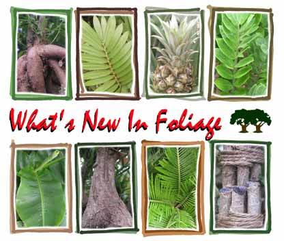 What's New In Foliage
